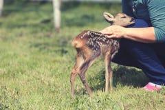 Wildlife rescue Stock Photo