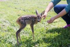 Wildlife rescue Stock Photography