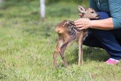 Wildlife rescue Stock Image