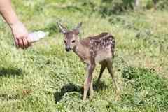 Wildlife rescue Royalty Free Stock Image