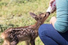 Wildlife rescue Stock Images