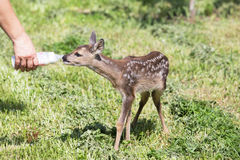Wildlife rescue Royalty Free Stock Images