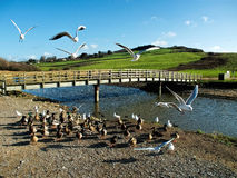 Wildlife At The River Char Royalty Free Stock Image