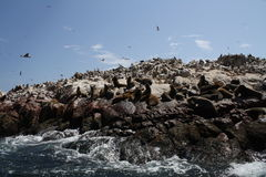 Wildlife on Rocks Royalty Free Stock Photography