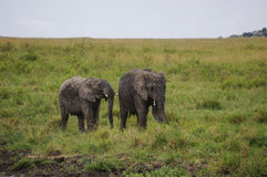 In wildlife sanctuary Royalty Free Stock Photography
