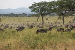 In wildlife sanctuary Stock Image