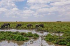 In wildlife sanctuary Royalty Free Stock Image