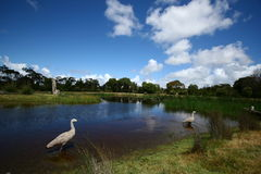 Wildlife sanctuary in Melbourne Royalty Free Stock Photos