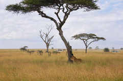 In wildlife sanctuary Stock Images