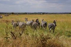 In wildlife sanctuary Stock Photo