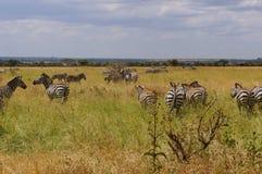In wildlife sanctuary Royalty Free Stock Photo