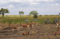 In wildlife sanctuary Royalty Free Stock Photos