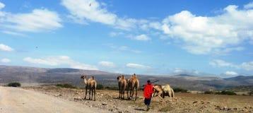 Wildlife scene from Kenya Royalty Free Stock Photo