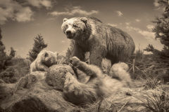 Wildlife scene - wildlife scene Royalty Free Stock Images