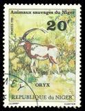 Wildlife, Scimitar Oryx stock images