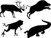 Wildlife silhouettes Royalty Free Stock Photos