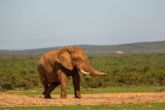 Wildlife in South Africa Stock Image