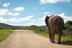 Wildlife in South Africa. Elephants inside Addo Elephant National Park in South Africa Royalty Free Stock Photo