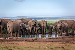 Wildlife in South Africa Royalty Free Stock Photography