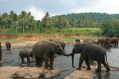 Wildlife in Sri Lanka Royalty Free Stock Photography