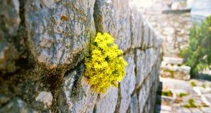 Wildlife on stones of orthodox church Island Gospa od Skrpjela Perast Boka Kotorska Montenegro.  stock photo