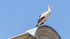 Wildlife Stork. Wilflife adult Stork, sitting and resting on a roof in the german city of Forchheim in Upper Franconia, Bavaria. Shot Midday on a sunny summer Stock Image