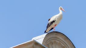 Wildlife Stork Stock Image