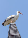 Wildlife Stork Stock Photo