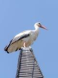 Wildlife Stork Stock Photo