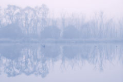 Wildlife at sunrise in fog. In the background Royalty Free Stock Image