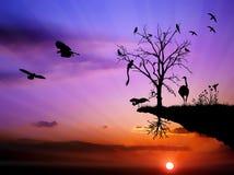Wildlife sunset birds colorful illustration. Colorful wildlife birds nature sunset concept Stock Photography