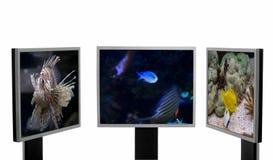 Wildlife and technique. Stock Photos