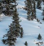 Wildlife Tracks Through Pristine Snow Royalty Free Stock Photo