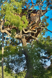 Wildlife Tree House Camp In Yala National Park, Sri Lanka Stock Photos