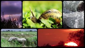 Wildlife tribute, montage stock video footage
