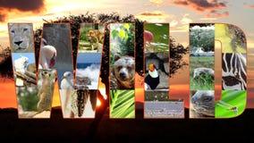 Wildlife tribute, montage stock video