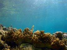Wildlife under the sea. Corals and under the sea wild life of angels` cove samal island. beautiful scenic underwater photography Stock Photography