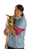 Wildlife veterinary care Royalty Free Stock Images
