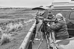 Wildlife watchers observing a herd of wolves on a cold rainy day. Yellowstone National Park, Wyoming, USA - October 29, 2016: Wildlife watchers observing a herd stock photography