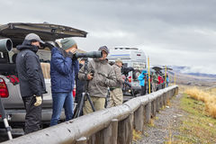 Wildlife watchers observing a herd of wolves on a cold rainy day. Stock Photography