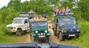 Tourists Wildlife Watching from Jeeps Stock Images