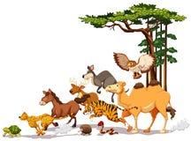 Wildlife Royalty Free Stock Photo