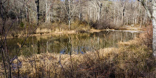 Wildlife Woodland Marsh. Located rural southwest Virginia, USA Royalty Free Stock Photography