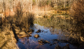 Wildlife Woodland Marsh. Located rural southwest Virginia, USA Royalty Free Stock Image