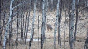 Wildlife, Woodland, Tree, Forest royalty free stock image