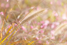 Wildness grass. Field during sunset Royalty Free Stock Images