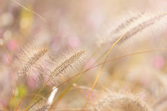 Wildness grass with sunlight Stock Photos