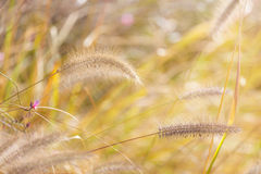 Wildness grass. Under the sun light Stock Photos
