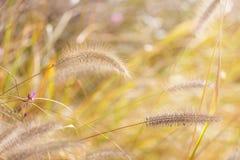 Wildness grass Stock Photos