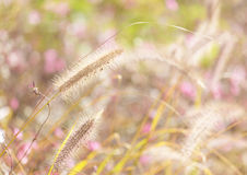 Wildness grass. Under the sunlight Stock Images